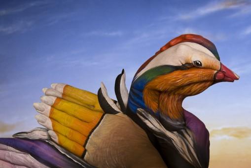 Painting Art by Guido Daniele - Mandarin-Duck