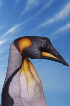 Painting Art by Guido Daniele - Penguin-226x340