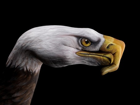 Painting Art by Guido Daniele - bald eagle02